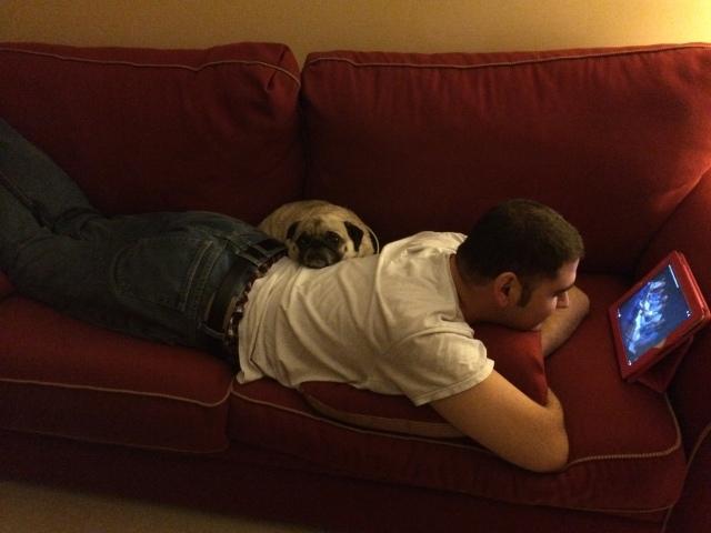 snuggle pug