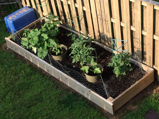 as of today... tomatoes, zucchini, eggplant, cucumber, red and green peppers
