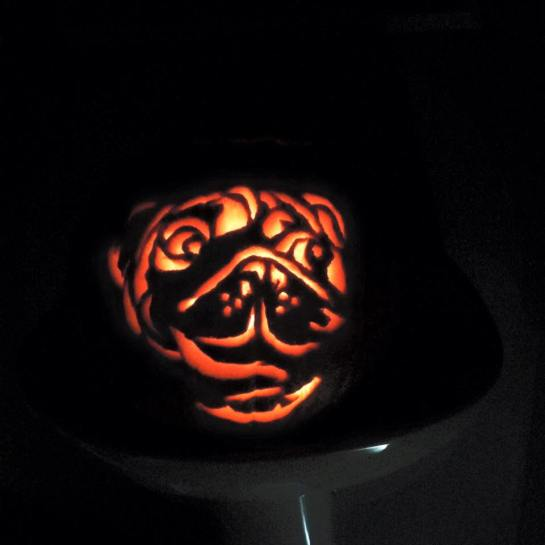 My awesome pug pumpkin I carved for Halloween!